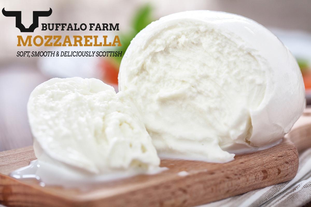 Buffalo Farm Buffalo Mozzarella Production